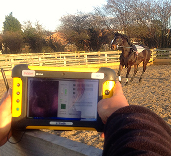 Equine Surgical Referrals - Overground Endoscopy